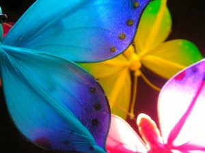 Butterflies_by_LadyXela