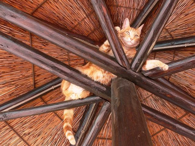 cat-164426_640