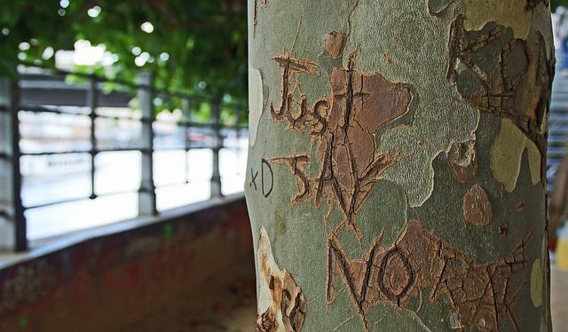 tree-bark-1209874_640